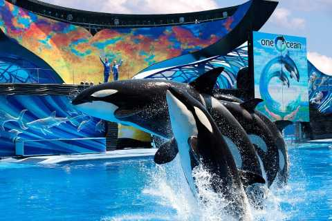 SeaWorld Orlando: Park Admission Ticket
