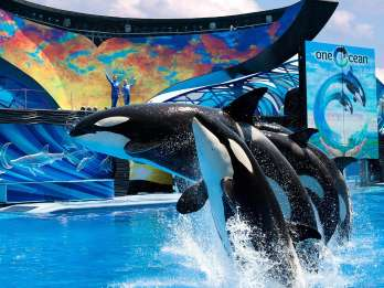 SeaWorld Orlando: Eintrittskarte