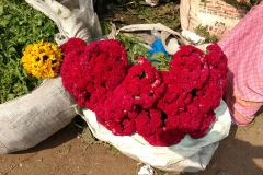 Kolkata: meio dia Excursão matinal w Mercado / Flor