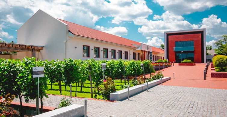 From Odessa: Half-Day Shabo Wine Culture Center Tour