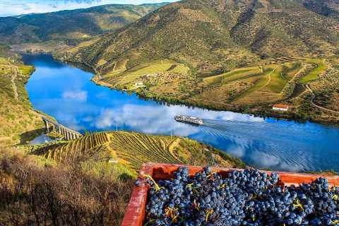 Private Tour: Douro Valley Wine and Food from Oporto