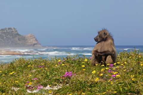 Cape Peninsula Full-Day Tour from Cape Town