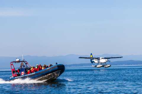 Desde Vancouver: Victoria Whale Watching Aventura