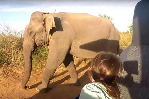 Multi-Day Tour: Udawalawe National Park Elephant Safari