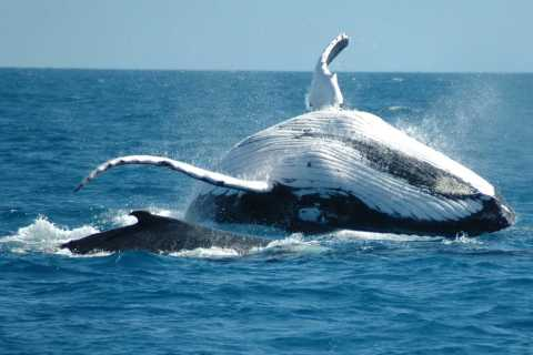 From Punta Cana: Sanctuary Whale Watching Day Trip