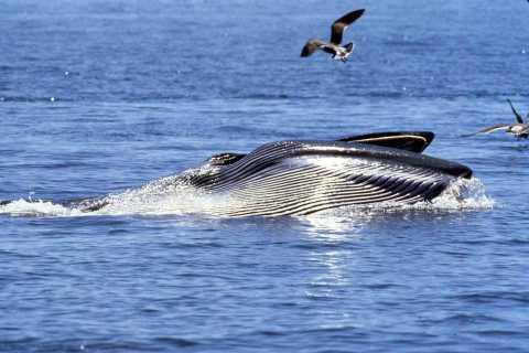 Big 5 Sea Safari Boat Ride of Gansbaai or Walker Bay