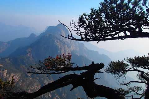 Huangshan Highlights 1-Day Bus Tour