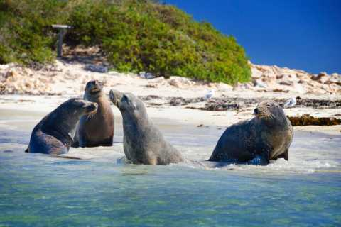 From Perth: Penguin Island, Cruise, and Wildlife Park