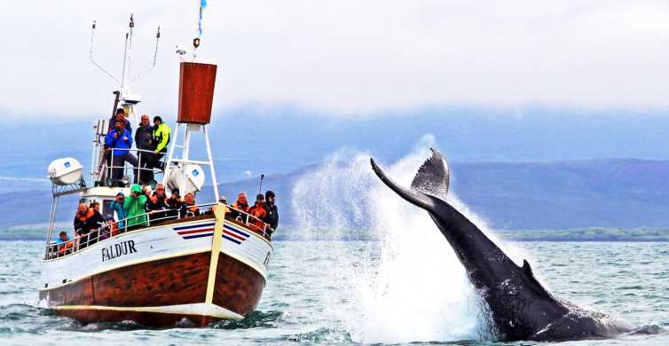 From Húsavík: Traditional Whale Watching Tour