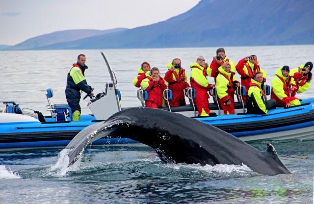 Húsavík: grote walvissen spotten en Puffin Island