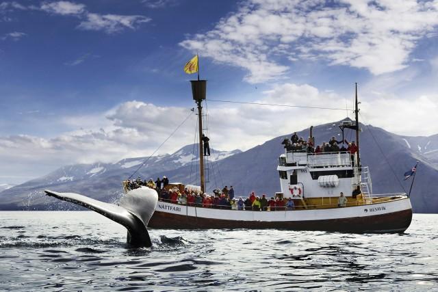 Húsavík: walvis- en papegaaiduikerspotten
