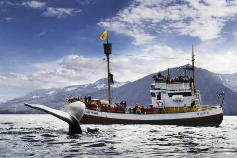 Húsavík: Whale Watching und Papageientaucher