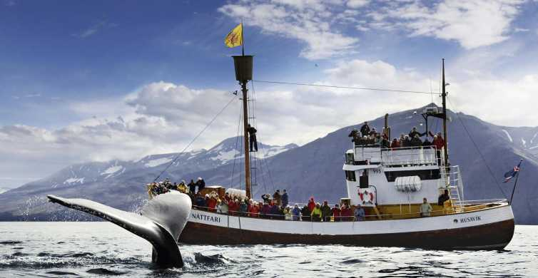 Húsavík: Whale Watching and Puffins