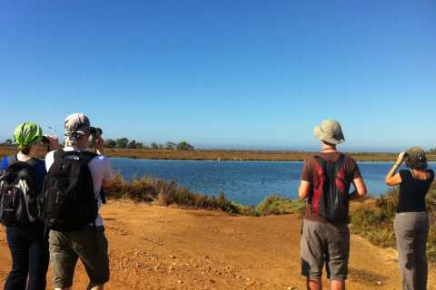 Rio Formosa Nature Park: 3-Hour Guided Walking Tour