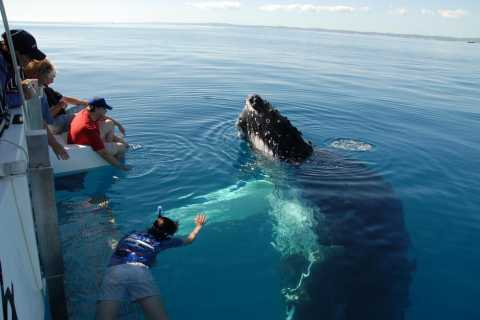 Hervey Bay: Exclusive Whale Watch Encounter