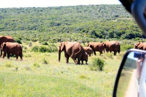 Vanuit Kaapstad: 5-daagse tour Garden Route en Addo