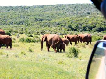 Ab Kapstadt: 5-tägige Tour Garden Route und Addo