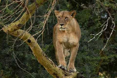 Lake Nakuru National Park: Full-Day Tour