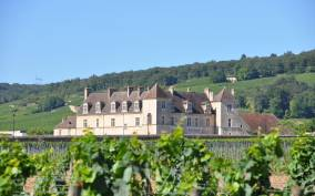 Burgundy Luxury Half–Day Côte de Nuits Vineyards Tour