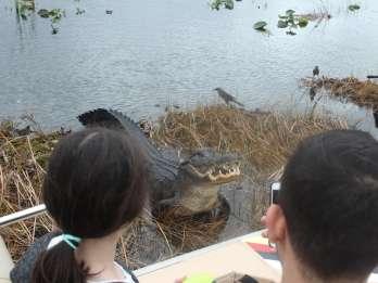 Florida: Everglades Airboat-Fahrt und Naturspaziergang