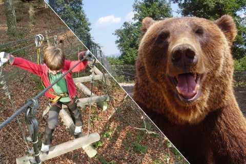 Bucarest: Transilvania con Dracula Castle & Bear Sanctuary