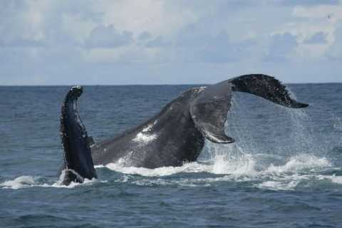 Ponta Delgada: Whales and Volcanoes Tour with Lunch