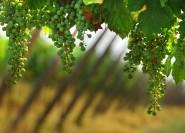 Ab Bergamo: Franciacorta Weinprobe und Einkaufs-Tour