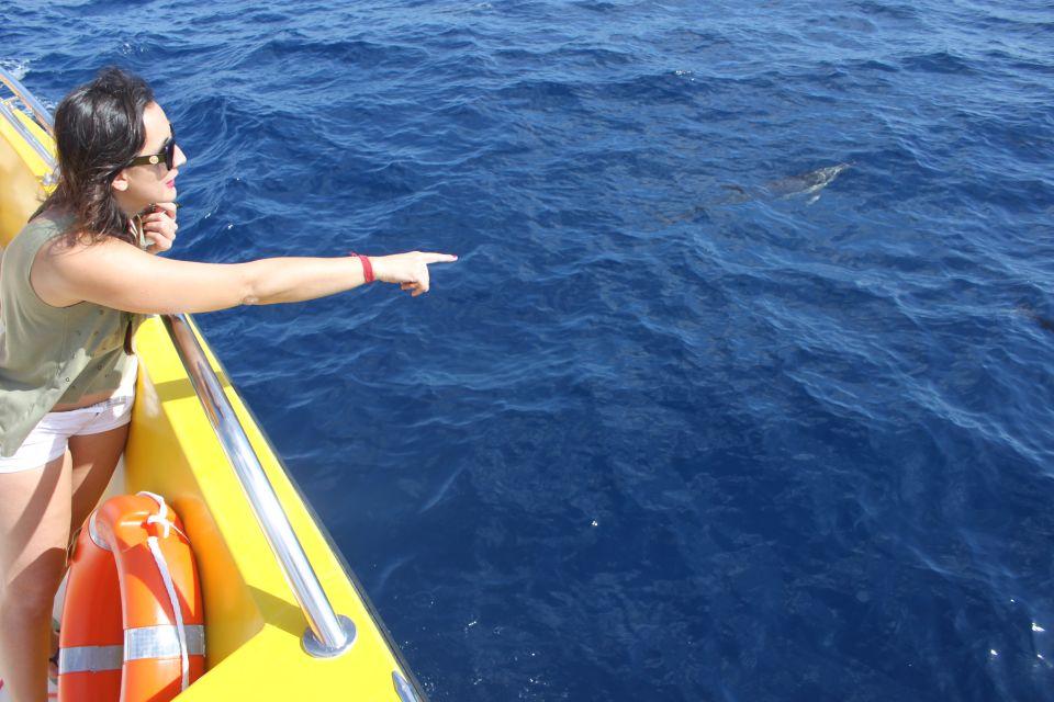 1.5-godzinny rejs połączony z oglądaniem delfinów