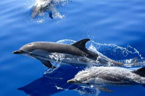 Lanzarote: 1,5-uur durende minicruise dolfijnspotten