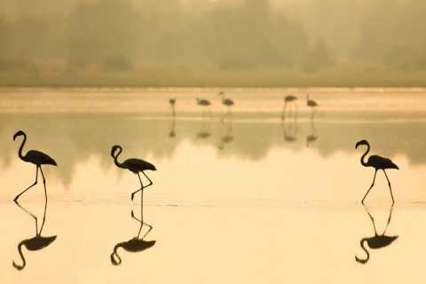 From Seville: Doñana National Park Full-Day Private Tour