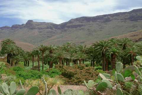 Maspalomas: Kamelsafari och tapas med transport