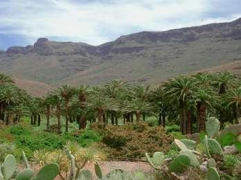 Ab Maspalomas: Kamel-Safari mit Tapas und Transfer