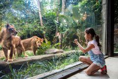 Bilhete de Entrada Zoológico de Bali