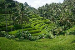 O Melhor de Bali: Excursão Particular Personalizada de 1 Dia