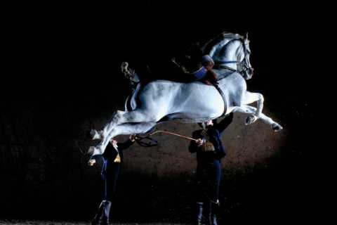 Jerez Private Tour From Seville: Wine and Equestrian Art