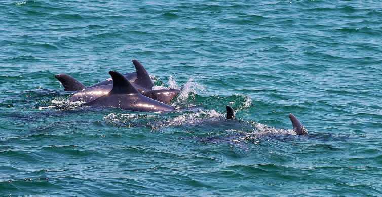 Tour con avvistamento dei delfini da Lisbona