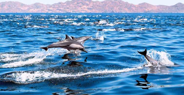 Gran Canaria: Dolphin Watching & Güi Güi Beach by Boat