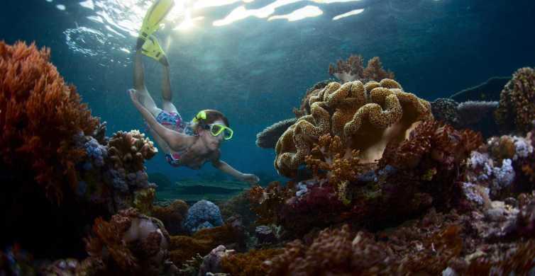 Tour Mergulho de Snorkel em Nusa Lembongan saindo de Bali