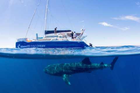 Ningaloo Whale Shark Swim by Sailing Catamaran from Exmouth