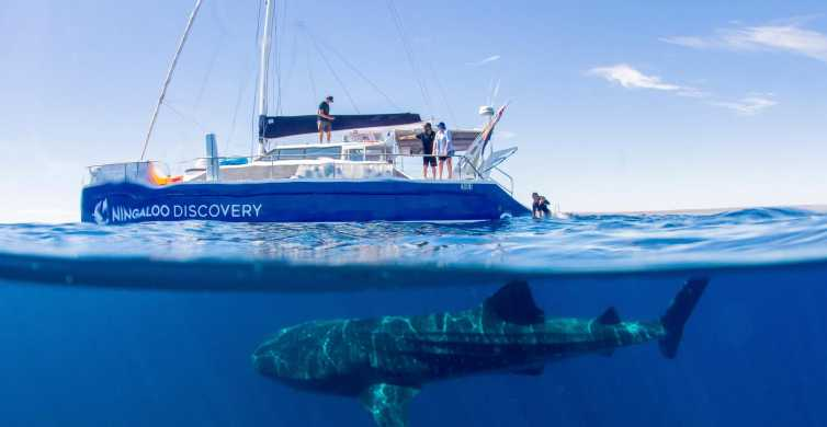 Ningaloo Whale Shark Swim by Sailing Catamaran from Exmouth