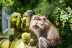 Tour Particular Floresta dos Macacos, Terraços e Tanah Lot