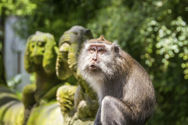Ubud: Monkey Forest, Rice Terrace & Tanah Lot Private Tour