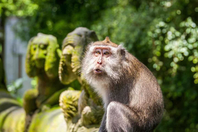 Ubud: Monkey Forest, Reisterrassen & Tanah Lot - Privat-Tour