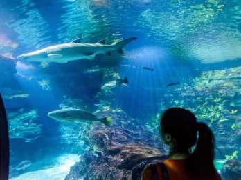 Barcelona Aquarium: Ticket ohne Anstehen