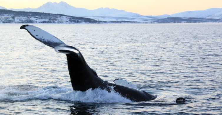 From Tromsø: All-Inclusive Whale and Sea Bird Boat Cruise