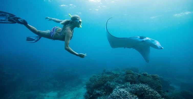 From Bali: Swim with Manta Rays in Nusa Penida