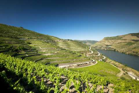 From Porto: Full-Day Douro Valley & Wine Tour