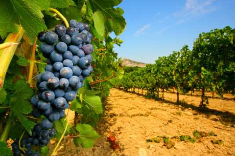 From Avignon: Half-Day Great Vineyards Tour