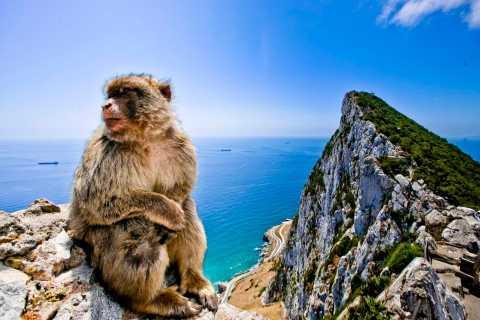 Desde Cádiz: viaje privado de 1 día a Gibraltar y Bolonia