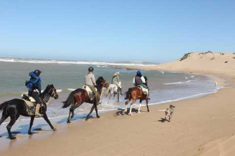 From Essaouira: 1-Hour Horse Ride